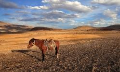 Конь и его тень