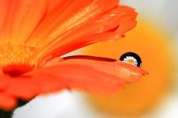Оранжевое лето...