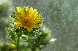 Под летним дождем