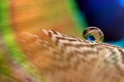 Чудо в перьях