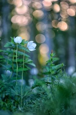 Весеннее настроение