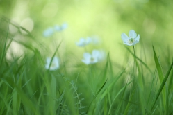 Свежесть весны
