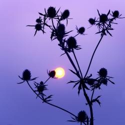 Обнимая солнце