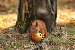 Какой фруктик подвернулся!