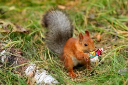 Все малыши любят конфеты!