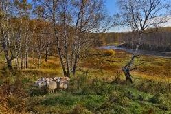 Село Костино, Муромцевский район, Омская область