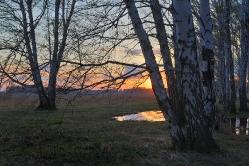 Апрельские лужи.  с. Осиповка, Горьковский район, Омская область