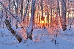 Фрагменты зимы. д. Осиповка, Горьковский район, Омская область