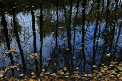 Отражение осени