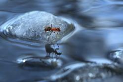 Дрейфующий на льдине