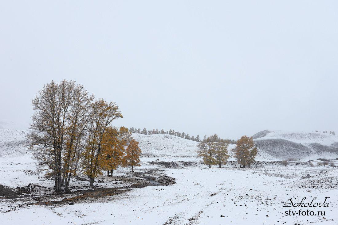 Белым, белым кроет снегом...