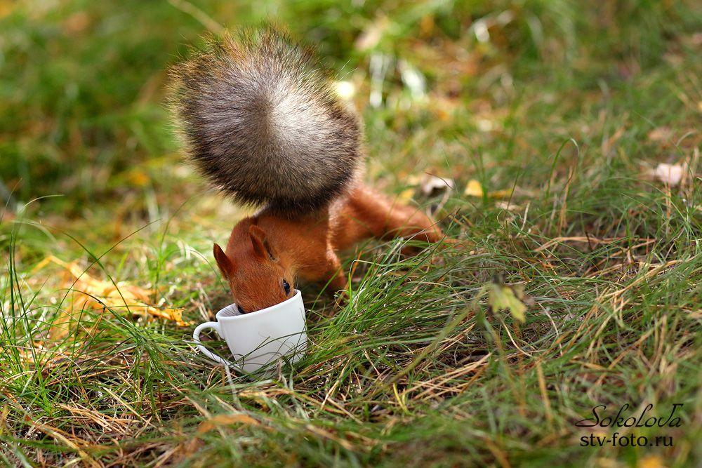 Хороший был кофе!