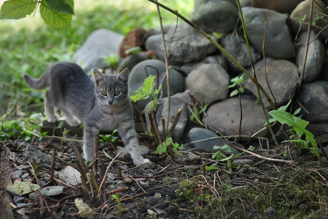 Обычный деревенский кот