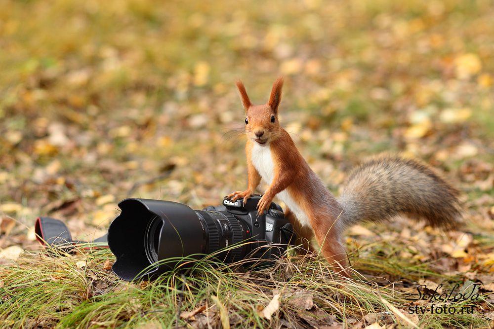 I like Canon too!
