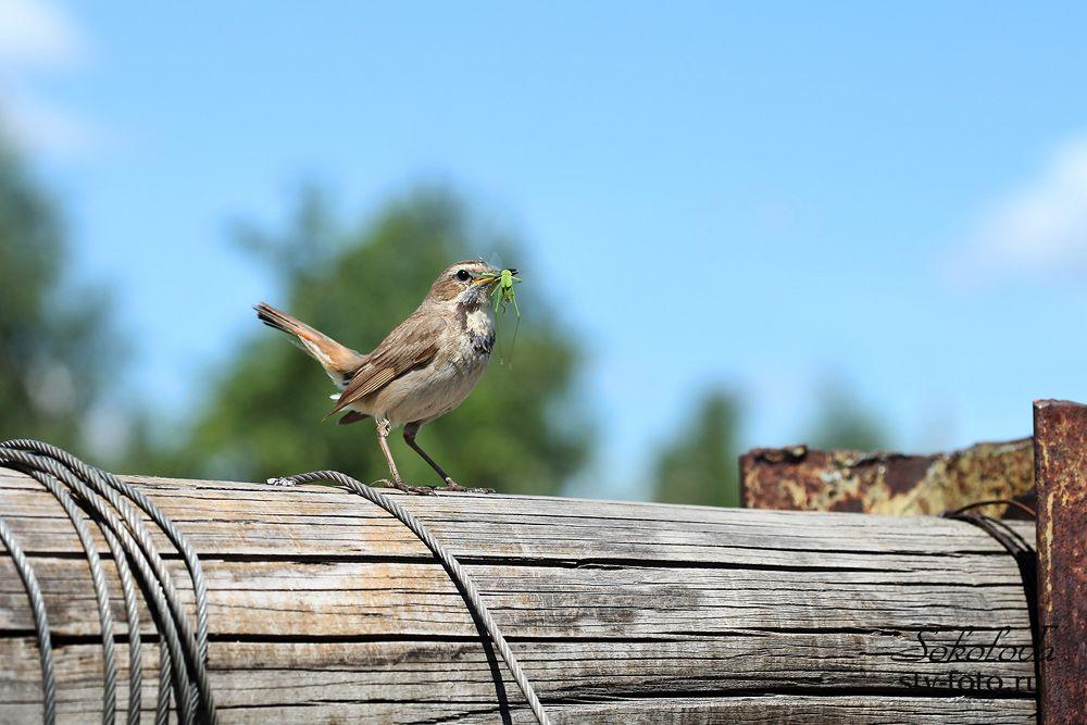 Птичка с добычей