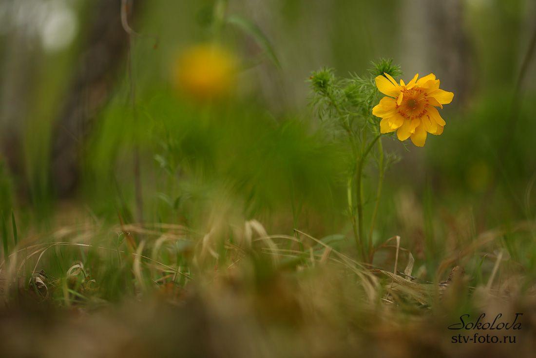 В весеннем лесу