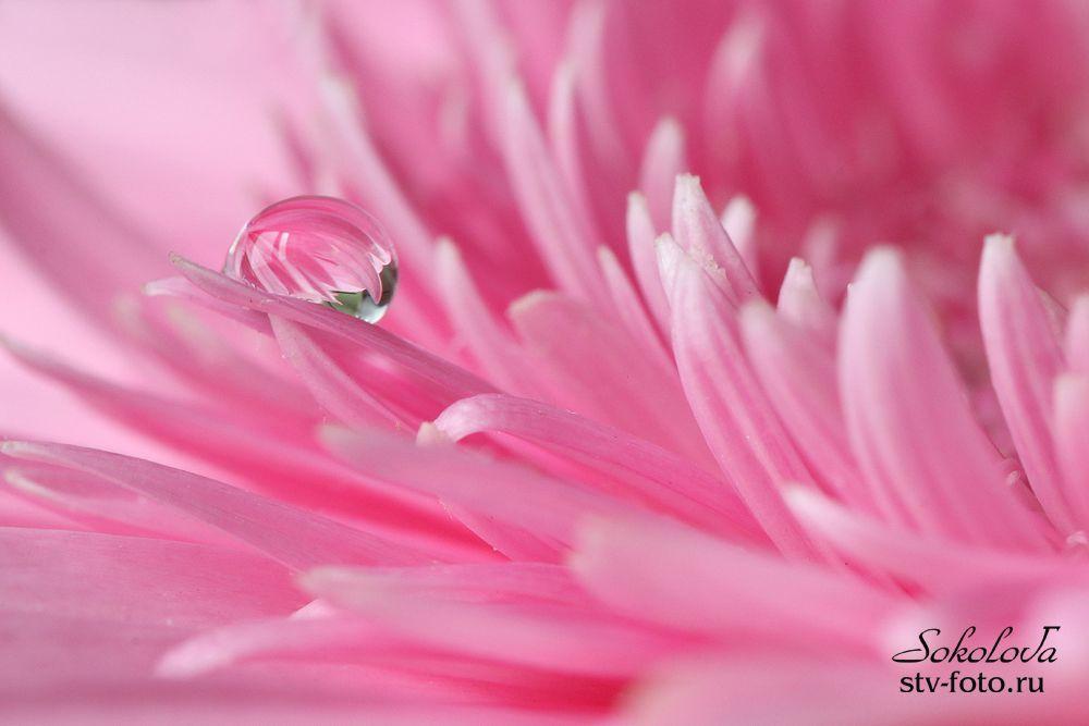 В розовых тонах....