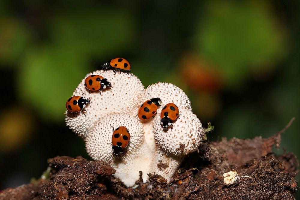 Очень вкусный гриб!