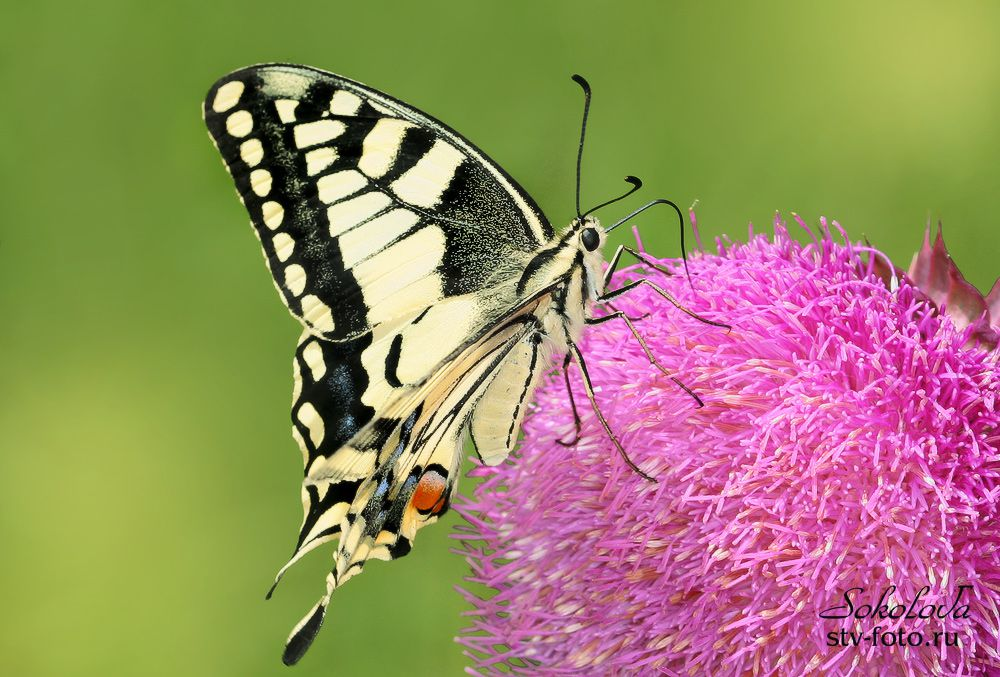 Бабочка на шаре