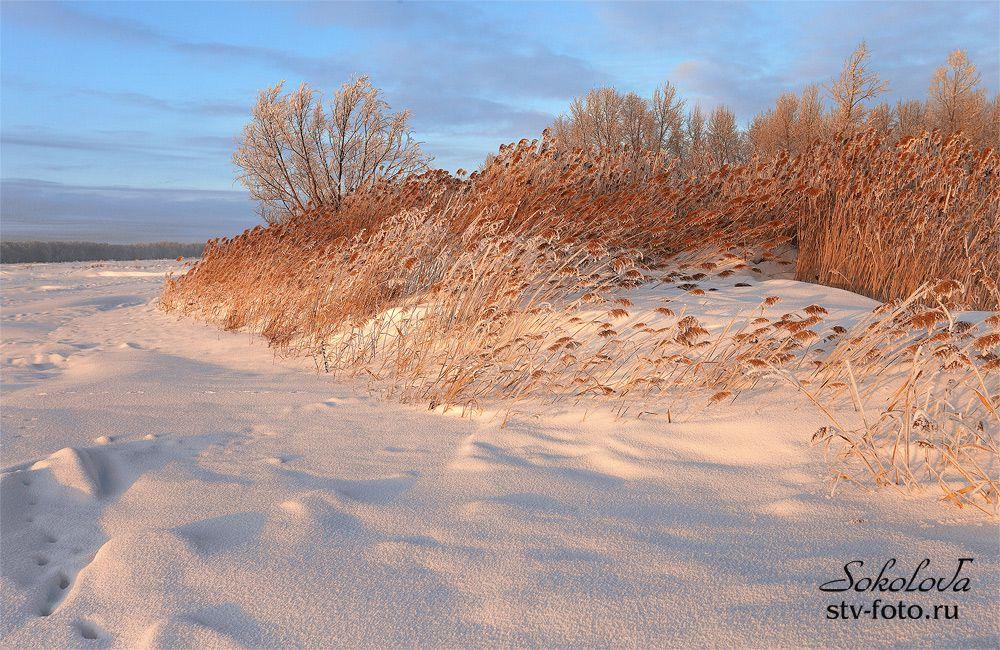 В лучах зимнего солнца