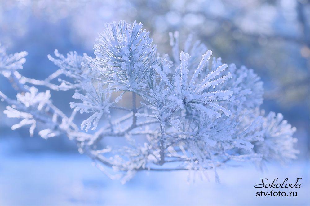 Зимнее макро