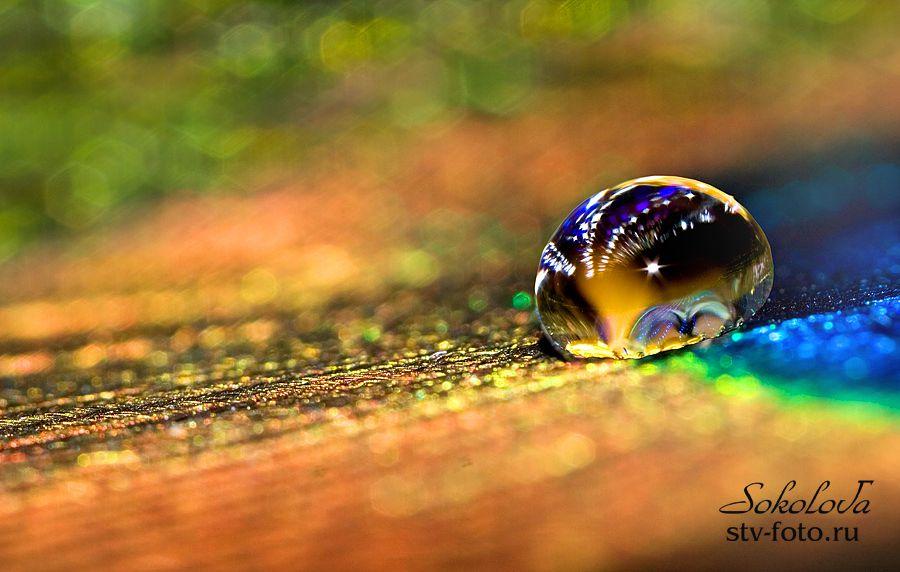 Цветовая феерия