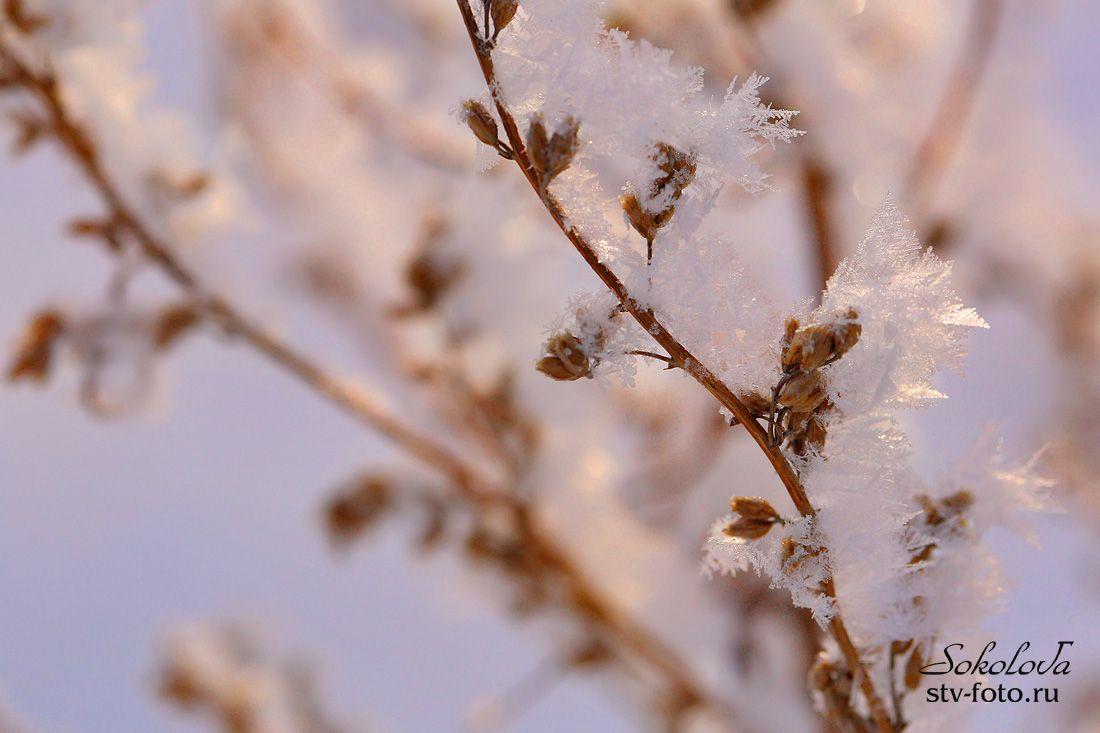 Под зимним солнцем снег искрится...