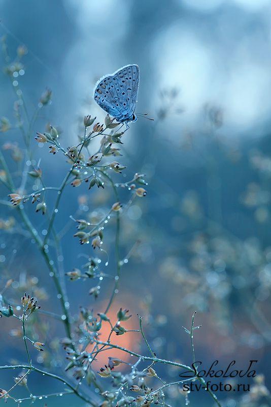Голубой блюз