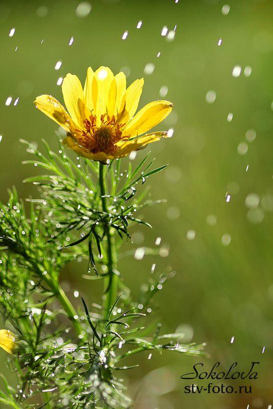 Радуясь солнцу  и дождю...