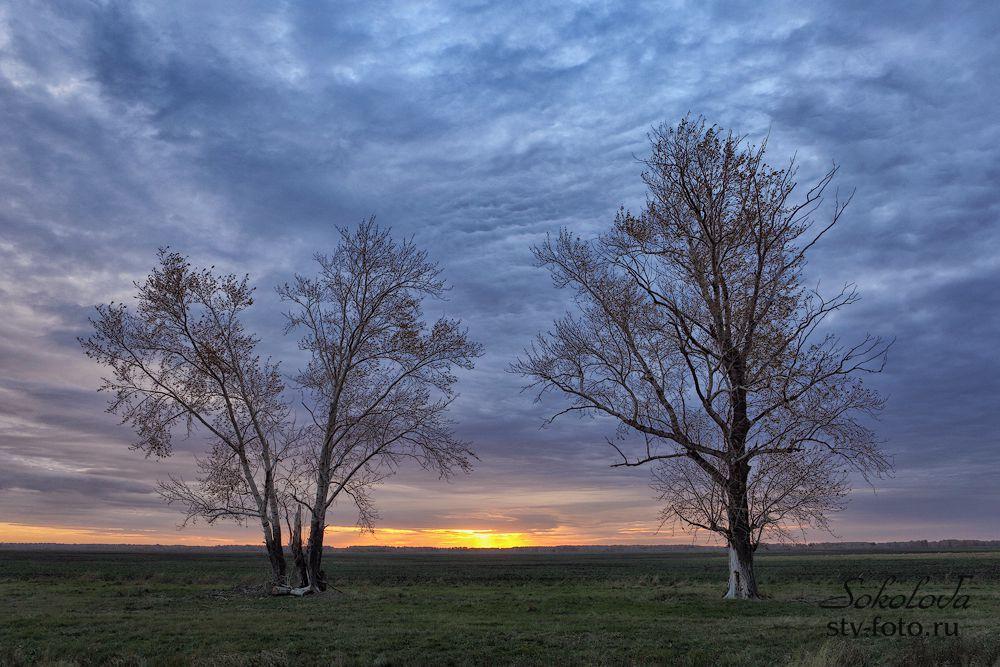 Два дерева в поле