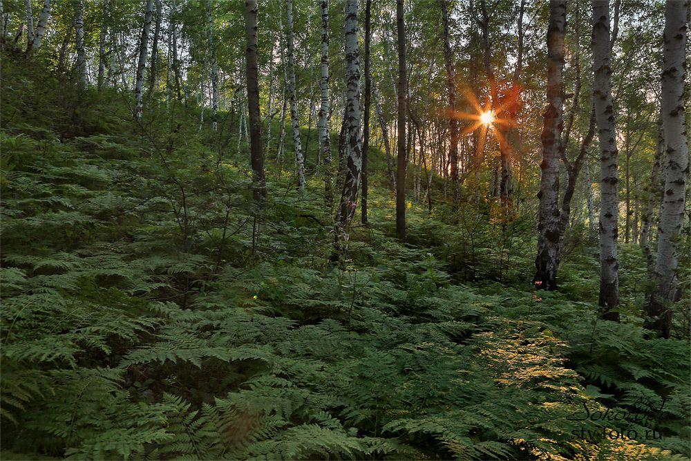 Папоротниковый лес