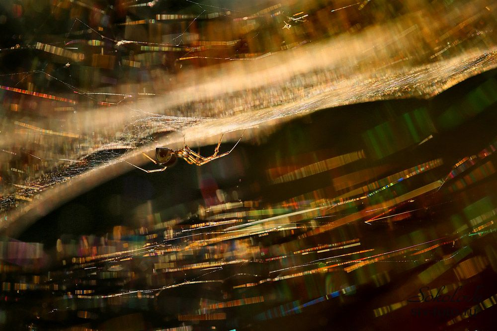 Светящаяся паутина