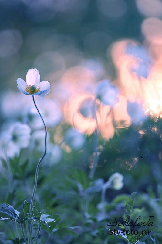 Очарование весеннего заката