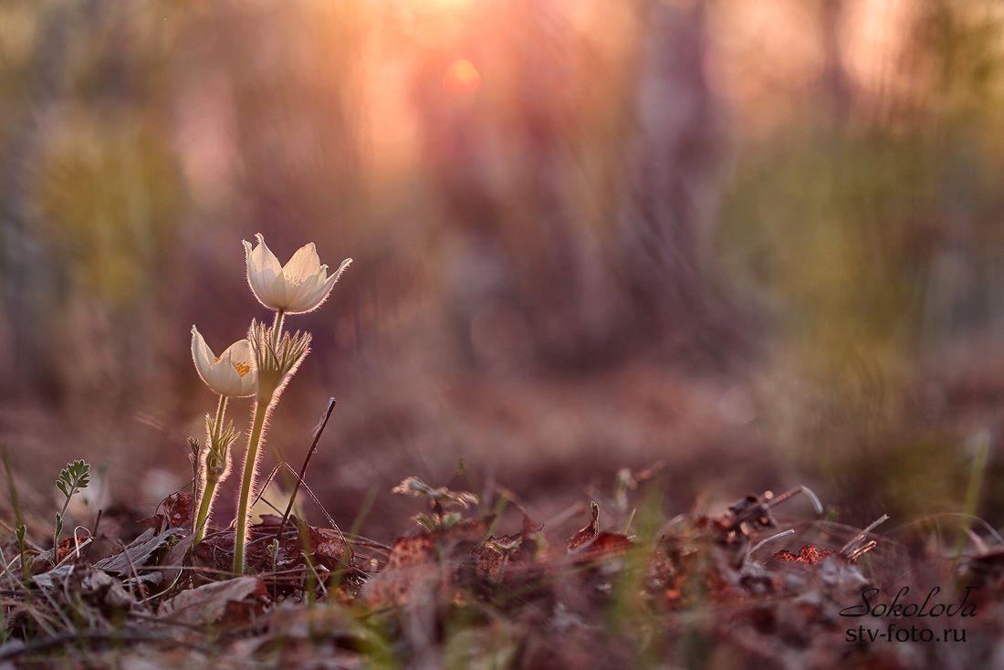 Весны прекрасное творение